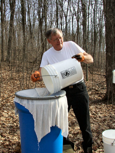 Poring Sap from a 5 Gallon Pail into one of 5 Collectiing Stations